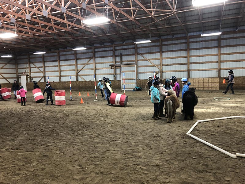 CRE Youth Adult Horse Workshops