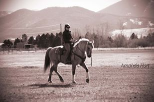 Morgan Gelding Corona Riding View