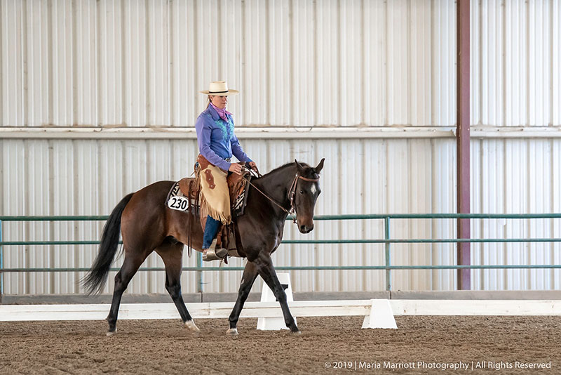 Amy Prechter Horse Trainer Competition